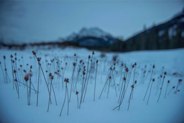 Imagen tomada del muro de instagram del Chivo Lubezki
